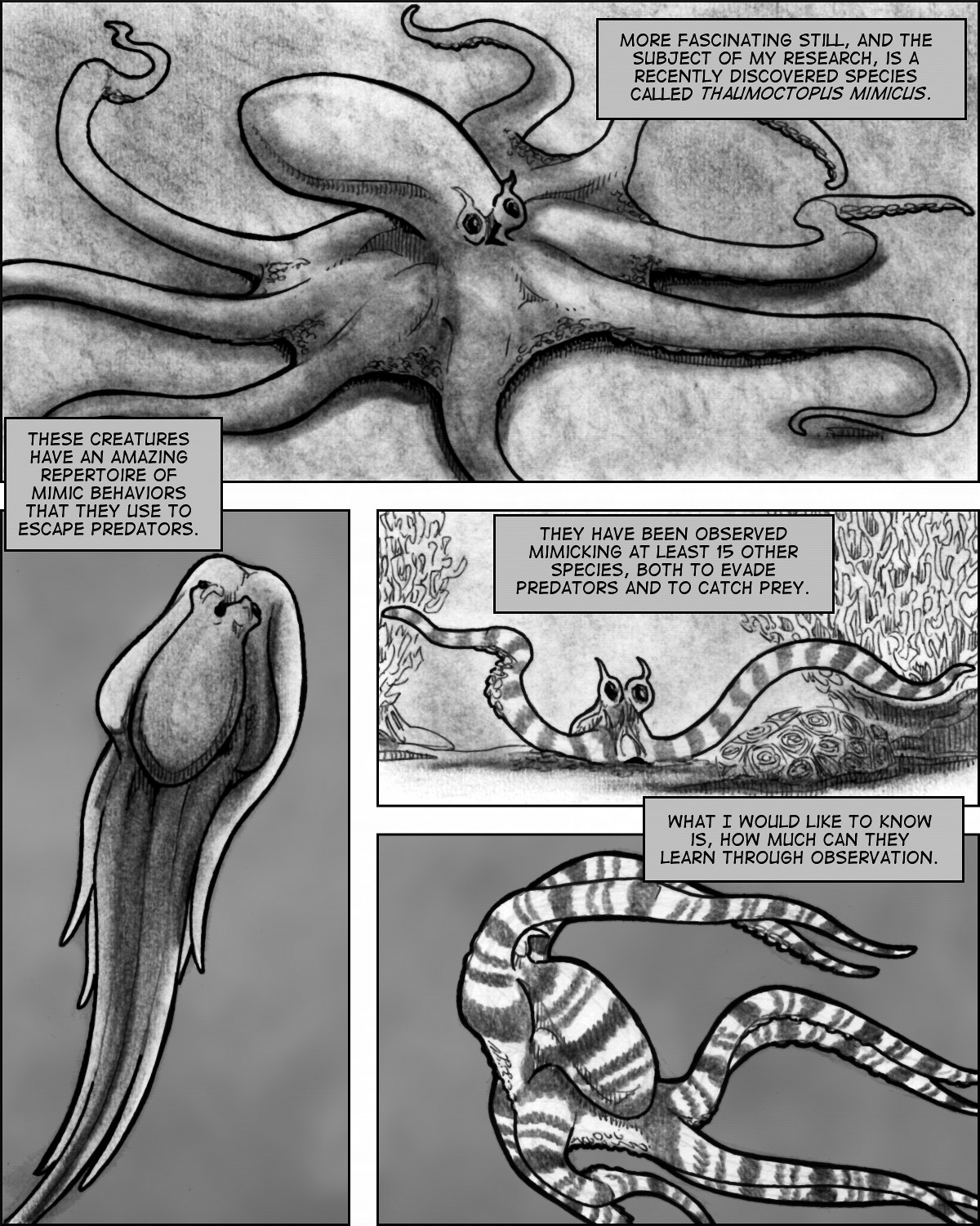The amazing mimetic abilities of Thaumoctopus mimicus