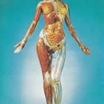 T.A.M. (Transparent Anatomical Mannequin) - vintage postcard